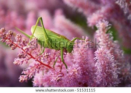 Green grasshopper on the pink flower #1