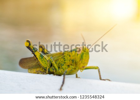 Green Grasshopper Stand On The White Wall #1235548324