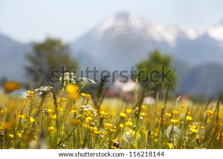 Green grassland  and mountains in bavaria