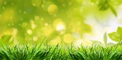 Green grassland landscape in summertime,wallpaper.