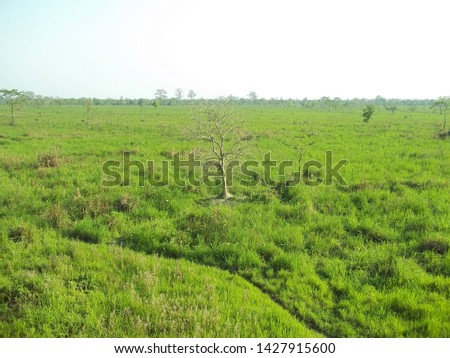 Green grasslands of Manas National Park. This is such a pure patches of grassland and home for large number of  wild life. #1427915600