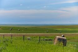 Green grassy farmland in the Great Plains South Dakota