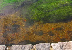 Green grassy weeds visible in water at edge of rock wall, gravel riverbed