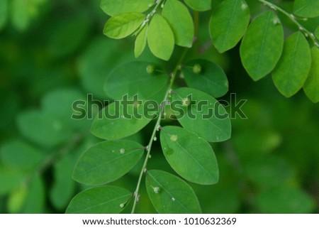 Green green green #1010632369
