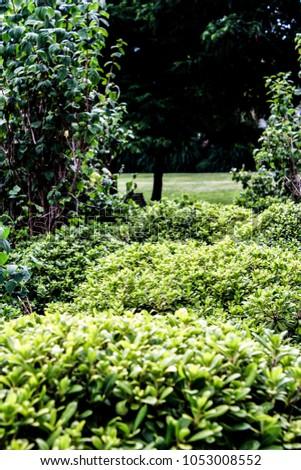 Green Green Green #1053008552