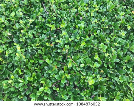 Green green green #1084876052