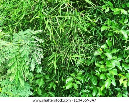 Green green green #1134559847