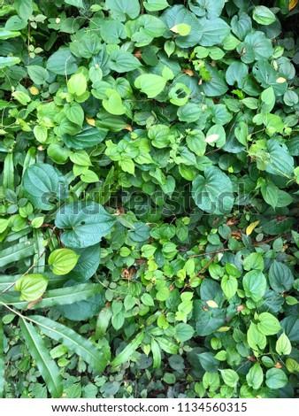 Green green green #1134560315
