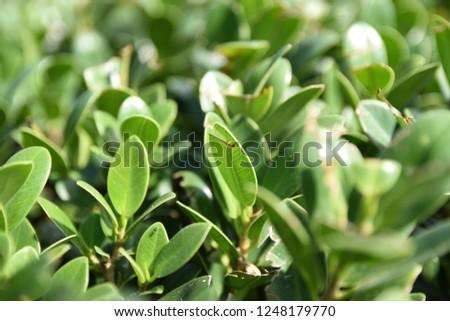 Green Green Green #1248179770