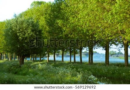 Green, green, green #569129692