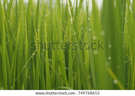 Green Green Green #749768653