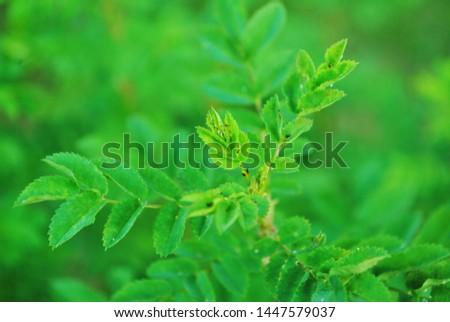 green green green herb and summer #1447579037