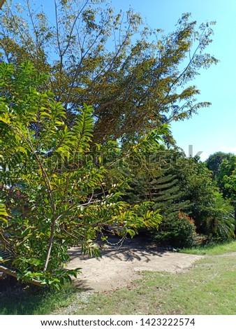 Green green green in summer season