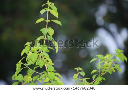 Green green leaves of green tree