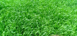 green grees view leaf plant color full background