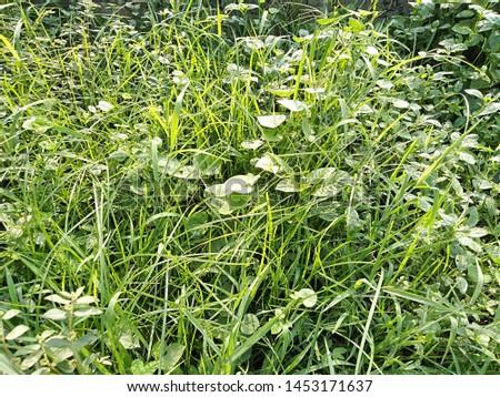 Green Ground, Green leaf, green grass, green garden