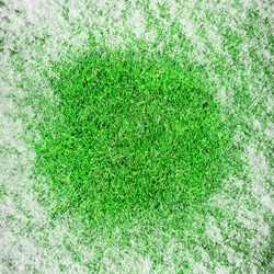 Green growing grass in snow
