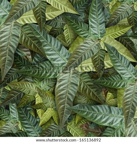 green grunge background leaf.  High resolution