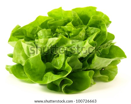 Green head of salad on isolated background