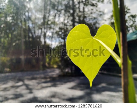 Green heart leaves #1285781620
