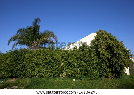 Green Hedge Surrounding House