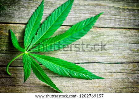 green hemp leaves on a wooden background closeup #1202769157