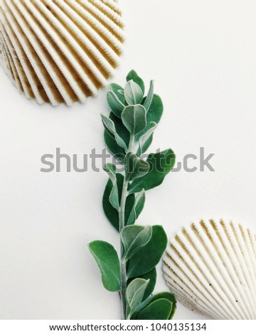 Green herb and two seashells close up in white background - Shutterstock ID 1040135134