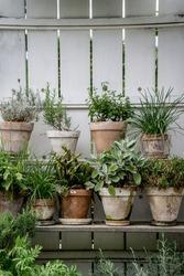 green herbal plants in a tiny vertical garden