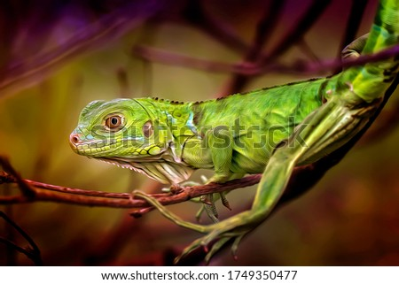 Green Herbivor Iguana - Oil Painting Art Nature Illustration
