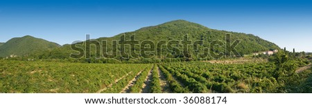 green hills and vineyard summer panoramic landscape - stock photo