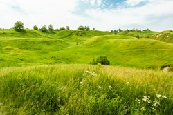 Green hills and wild flowers in the beginning of summer
