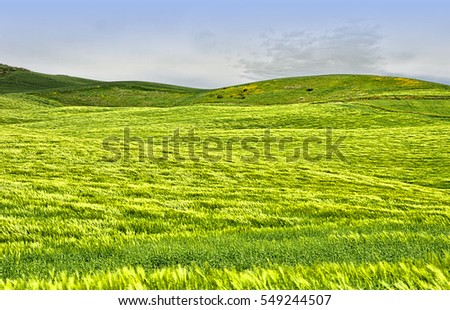 Green hills, blue sky. Andalusia. Spain. #549244507