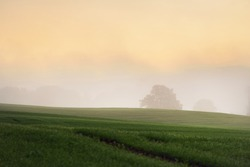 Green hills, plowed agricultural field with tractor tracks and forest at sunrise, close-up. Fog, haze. Soft golden sunlight. Autumn landscape. Idyllic rural scene. Nature, ecology, seasons, tourism
