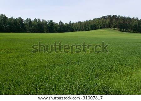 Green hills with trees