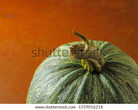 Green homegrown organic pumpkin on a red floor surface. Close up.