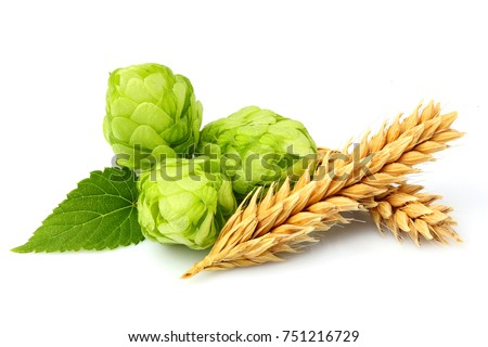 Shutterstock Green hops, ears of barley and wheat grain.Isolated closeup on white background.