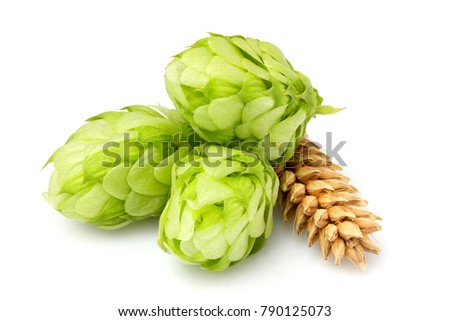 Green hops, ears of barley and wheat grain.Isolated closeup on white background. #790125073