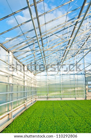 green house interior with plants