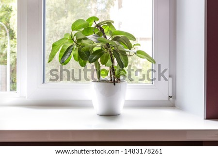 Green house plant in a white pot on windowsill at home, space for text