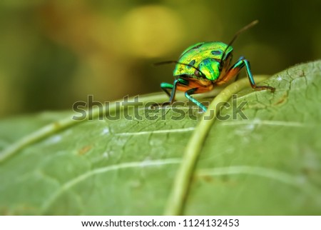 Green insect macro shot . Macro insect of green colour. #1124132453