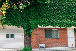 Green ivy covered house at Seongbuk-dong street in Seoul, Korea
