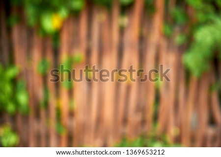 Green Ivy Creeper and Wooden Fence Blurry Photo. Construct from Posts that are Connect by Boards and Wire. Decorative Enhance the Appearance of a Property, Garden or Other Landscaping