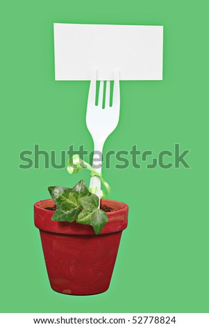 Green ivy in pot. Isolated on green