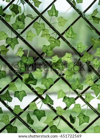 green ivy on wooden window lattice close up #651722569