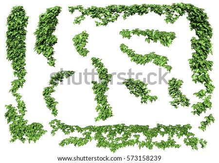Green ivy plant isolated. ivy leaves isolated on a white background. 3D illustration.