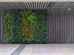 Green ivy wall .  Modern style.