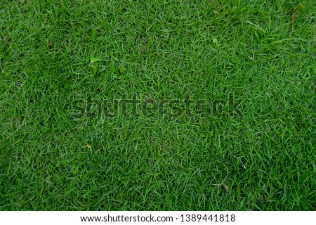 green japan hair grass texture background,view from the top,grass detail,nature theme image #1389441818
