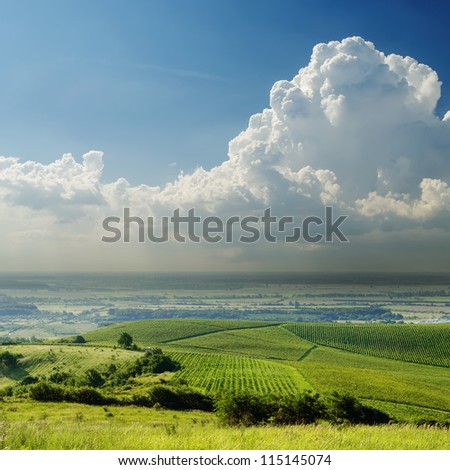 green landscape in fog under cloudy sky