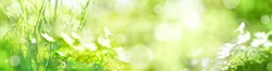 Green landscape panorama with bokeh and spring flowers for a background