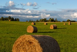 green landscape with hay rolls